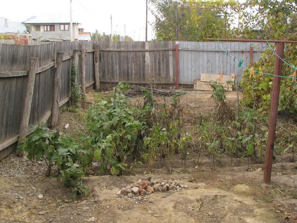 Vegetable garden at own house The vegetable garden lies with the side of the street. About 1/3 of the house is still unfinished, but the vegetables already grow in own garden.